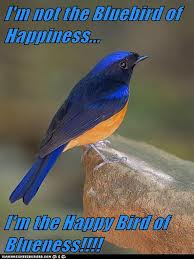 copy-bluebird-of-happiness1.jpg